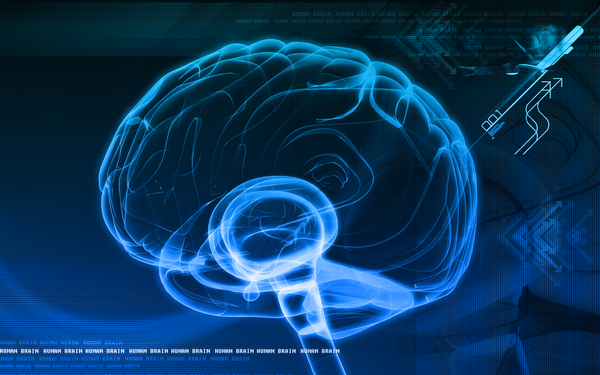 Funksjonell Nevrologi Fredrikstad Naprapat